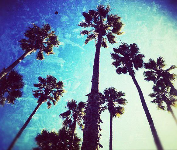 © 2012 Nicole Canegata - California Dreaming